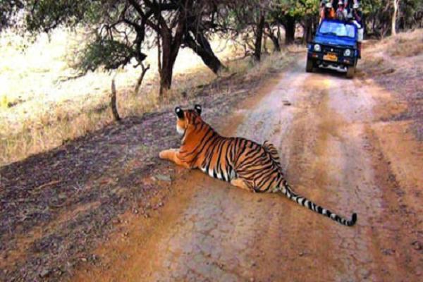 Best Tiger Safari in India