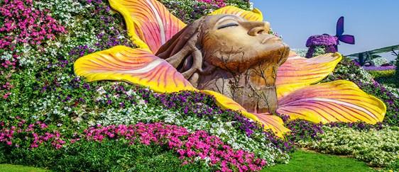 Amazing Miracle Garden